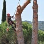 Élagage de grands arbres : trouver un bon professionnel et bénéficier des techniques efficaces