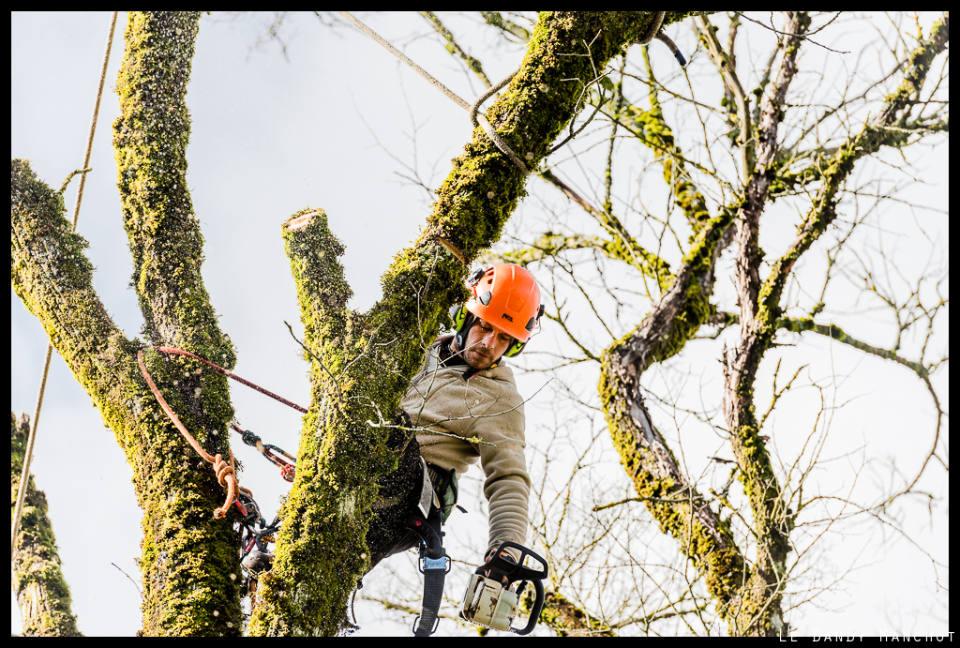 Aperçu des règles de sécurité applicables en matière de travaux d'élagage d'arbre