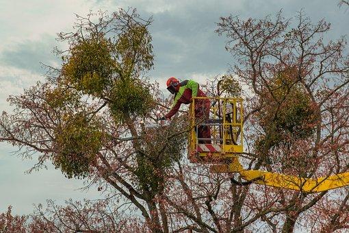 Les précautions à prendre pour réussir l'élagage d'un arbre âgé