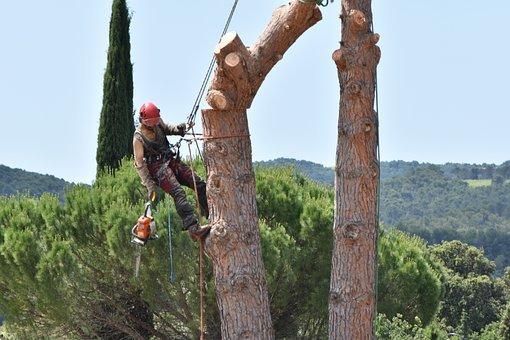 Focus sur les principes généraux de l'élagage d'arbre