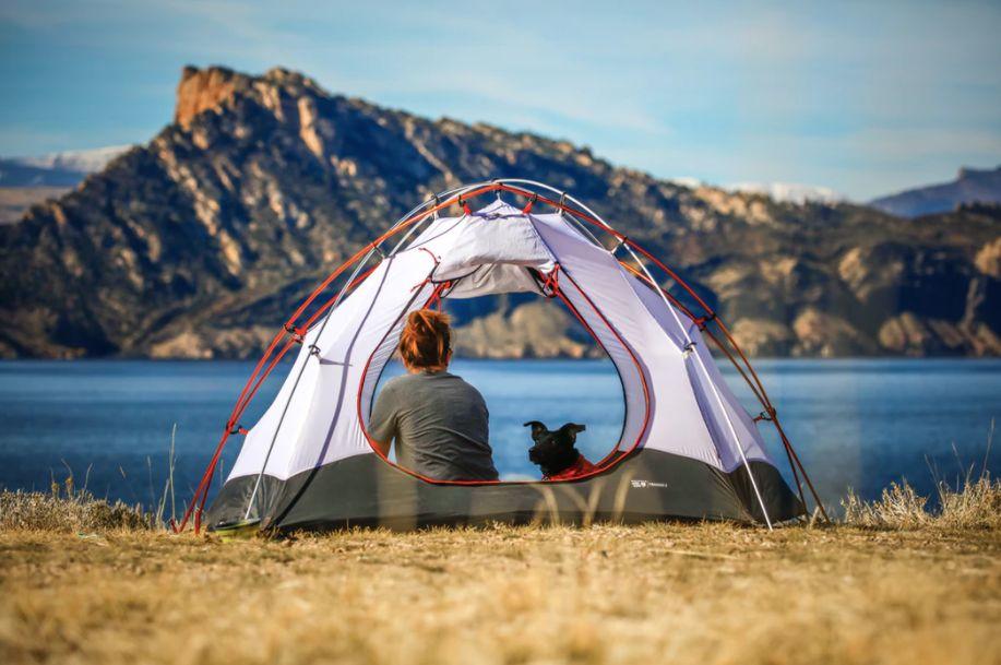 camping avec un chien